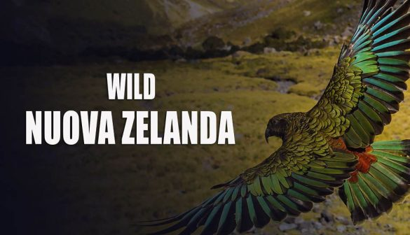 wild-nuova-zelanda-mediasetplay-episodio-1-video